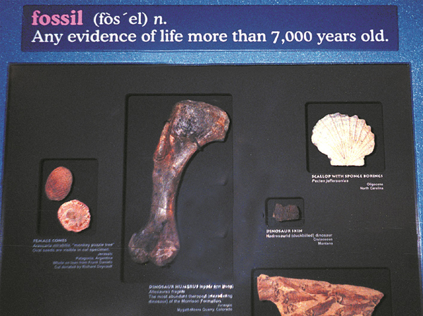 Fossil7000Sign-lge
